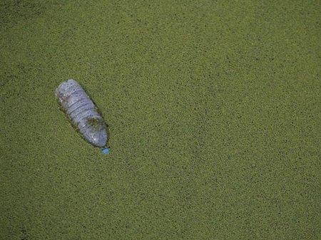 Hind okeanında plastik tullantılar adası tikiləcək